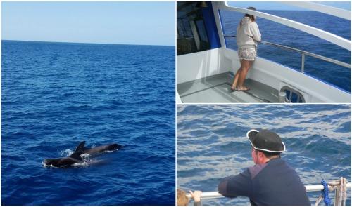 avistaje de ballenas y delfines